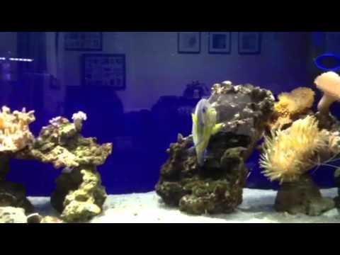 チョットだけ海水魚  2