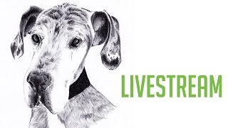 Drawing a Great Dane with Graphite Pencils - PET ART FRIDAY