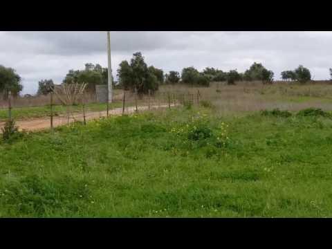 X - TROPHY - AVEIRAS DE BAIXO