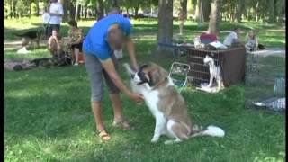 : У Сумах відбулась всеукраїнська виставка собак (оновлено)