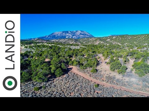 SOLD : Land For Sale in Colorado : 35 Acres with Mature Trees & Road Access near Public Land