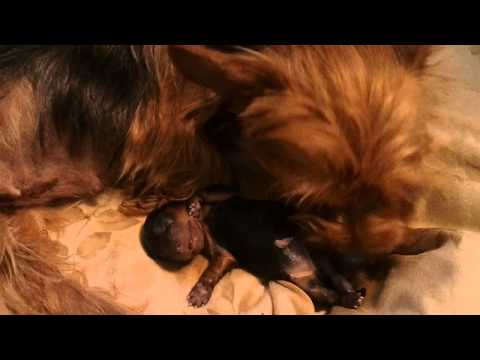 Fia my dog eats her first Homemade dog food from YouTube · Duration:  6 minutes 14 seconds