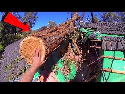 Tree Felling Fails Compilation And Idiots Working With Chainsaw ! Top Dangerous Working skills