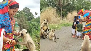 Langoors are waiting calm and quitely when this mother finish to feed her children on breeze