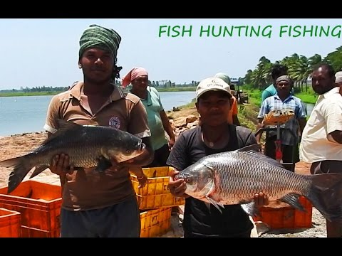 Catla Fish Fishing - Carp Catla Rarest Fishing - Bengal Carp Fishes  catching Techniques