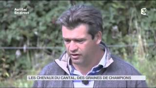 Animaux : Les chevaux du Cantal, des graines de champions