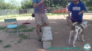 Debono Dog Training Skills & Games Class 7/26/14 8:30am