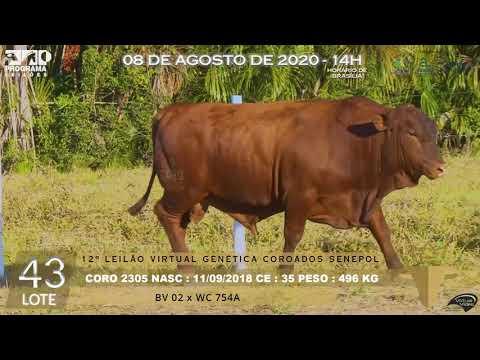LOTE 43 CORO 2305