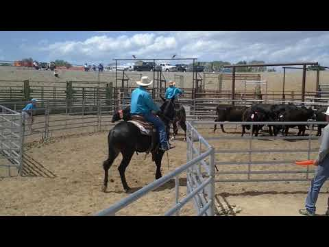 MOSES & Mark and DAPHNE & Me - Team Sorting - Jake Clark Mule Days 2016
