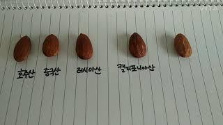 [교내독서UCC대회] 아몬드- 손원평