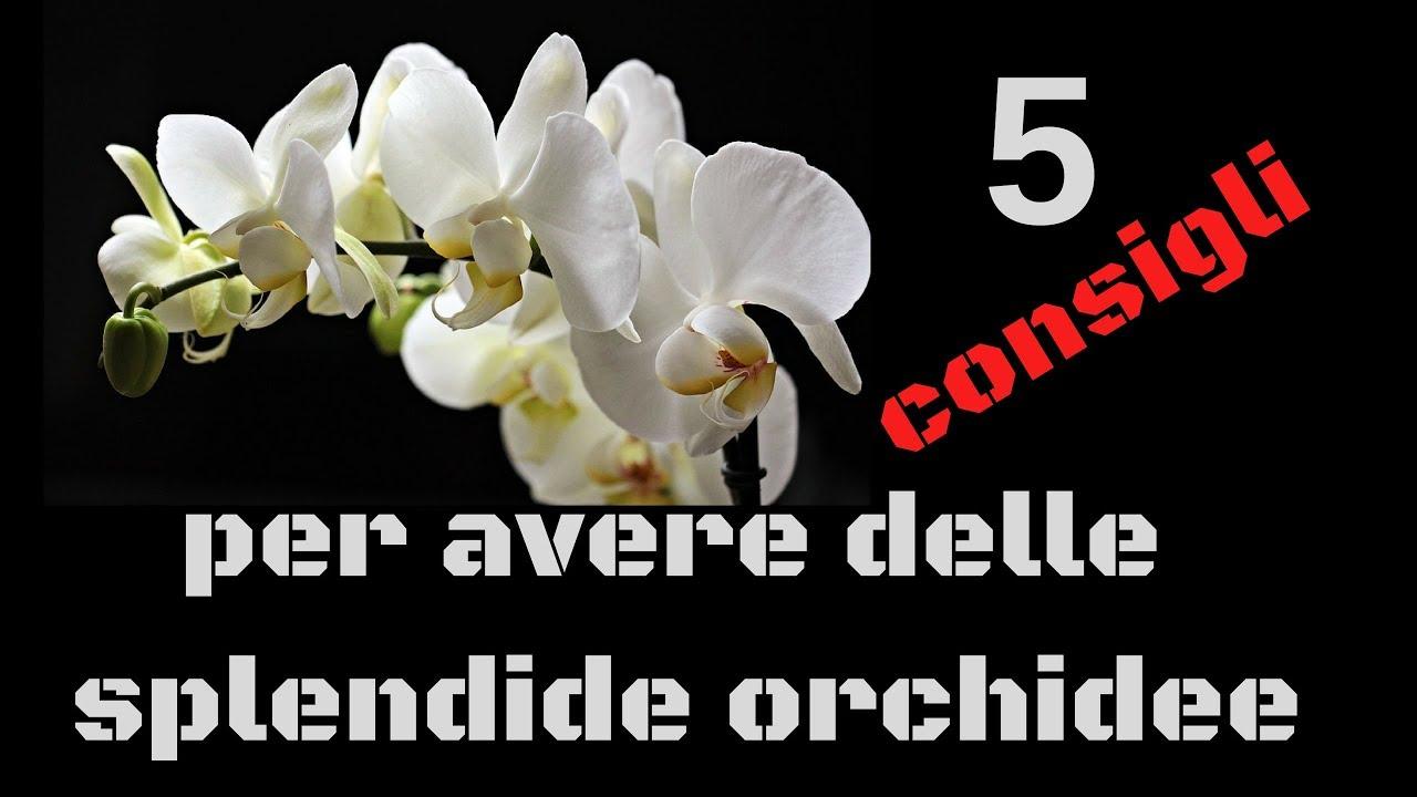 Orchidee Meravigliose Trucchi E Segreti 5 consigli per avere delle splendide orchidee!