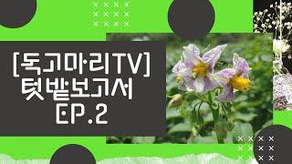 [독고마리TV]텃밭보고…