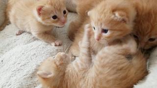 Live Streaming Kittens