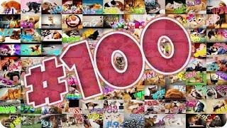 Приколы с животными №100   Кот из заставки  Смешные животные  Animal videos