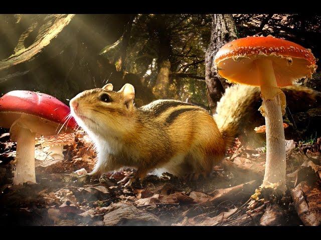 シマリスとスコーピオンマウスの視点で自然が映し出される!映画『小さな世界はワンダーランド』予告編