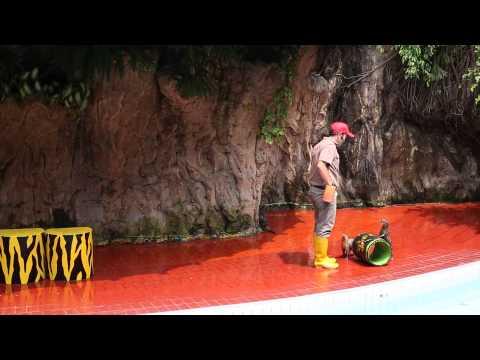 Ancol Gelanggang Samudera - Aneka Satwa Show - linsang berang berang (full show)