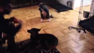 Natural Dog Correction - Nyc Dog Training - Dctk9