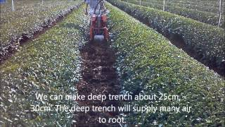 Deep cultivator for tea fields. MR-5