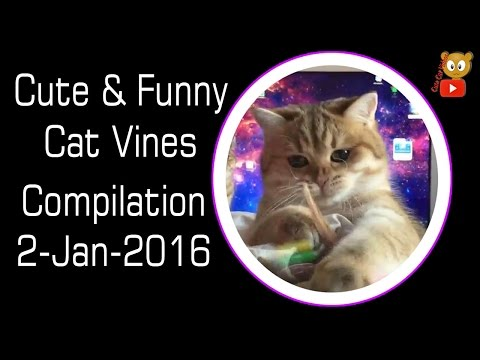 Cute & Funny Cat Kittens Vines Compilation 2-Jan-2016 – Cute Cat Videos – Videos Engraçados de Gatos