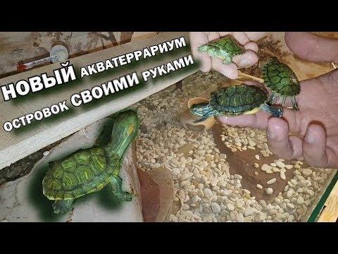 Новый большой акватеррариум для черепах | Островок для красноухих черепах своими руками