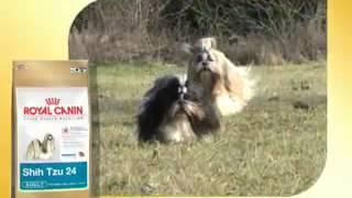 Royal Canin Shih Tzu: Pienso Especial Para Shih Tzu