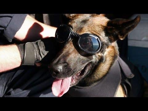 Coast Guard Florida: Flying Dogs