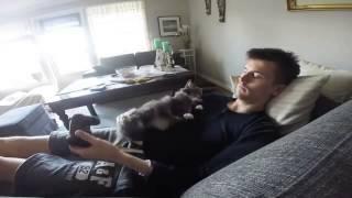 Кошка не хочет, что бы ты играл! Кошка хочет ласки