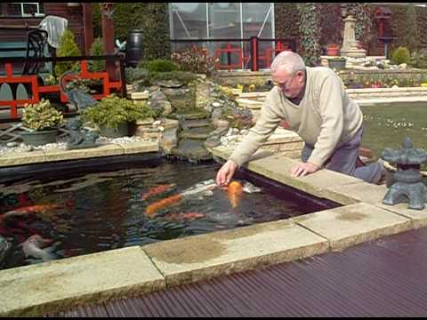 Koi carp pond latest youtube for Koi carp fish pond