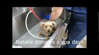 Rescued Yorkies' Spa Day