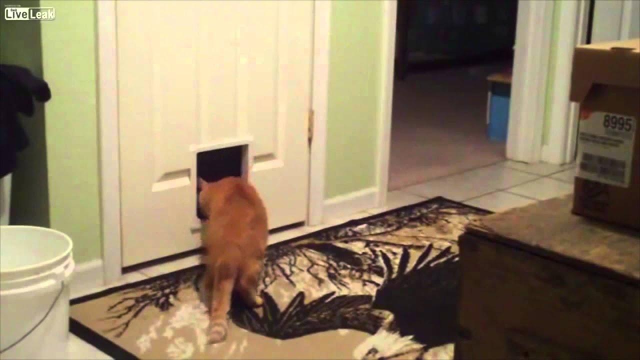 Розыгрыш с котом видео