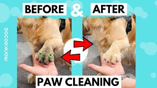 How to clean dirty dog paws in just 30 seconds. || Dog Care Tips || Monkoodog