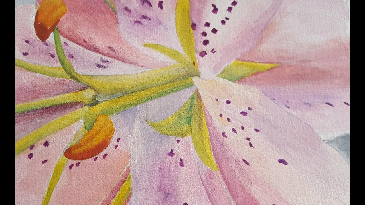 Timelapsegouache Painting Of Cropped Asiatic Lily Showing Use Of