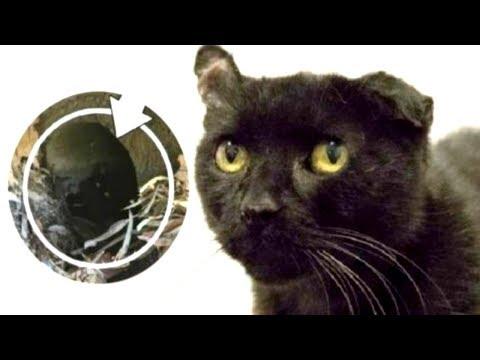 Вопрос: Пропала кошка 51 день назад, есть шансы найти?