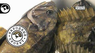 Морская рыбалка Камчатка Народный проект