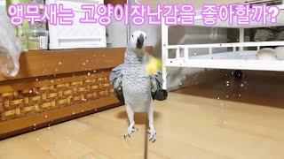 cutest parrots