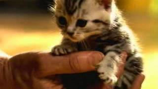 WHISKAS� Nederland - Maaltijdzakjes voor kittens
