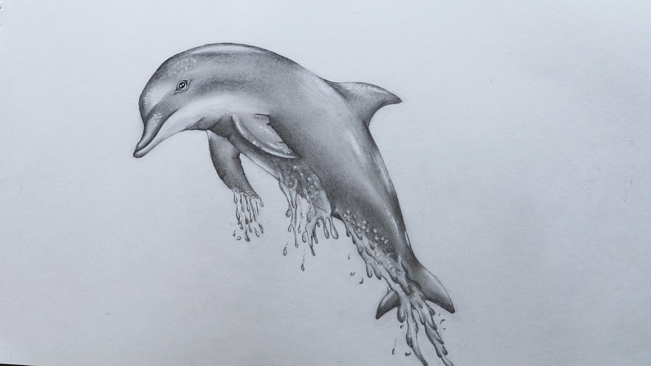 How to sketch dolphin youtube how to sketch dolphin thecheapjerseys Choice Image