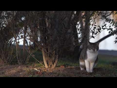 amazing funny cat videos compilation 2020