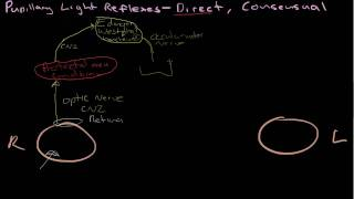 Pupillary Light reflexes - Direct and consensual.mp4