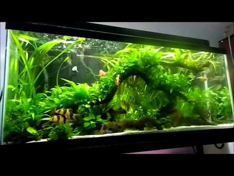 Fish tank question favorite fish you lost youtube for Fish tank riddle