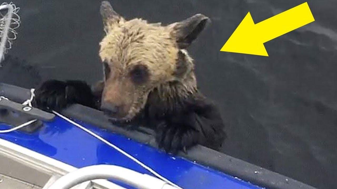 Als er begriff, warum die Bären auf sein Boot kletterten, war es fast zu spät