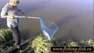 Как сделать болтушку из манки для рыбалки - рецепты ...