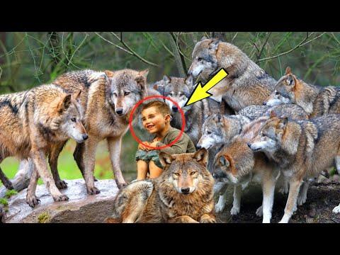 Старый Егерь был в изумлении, увидев в лесу маленького мальчика в стае волков... Подойдя ближе...