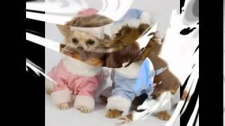 одежда для собак интернет магазин
