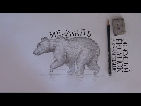 Как нарисовать медведя / How to draw bear