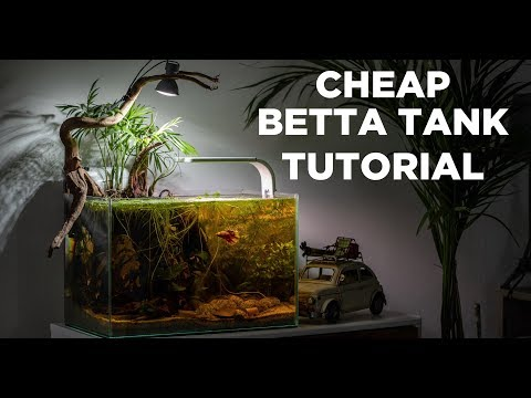 BETTA TANK Tutorial - Cheap And Easy Aquarium For BEGINNERS