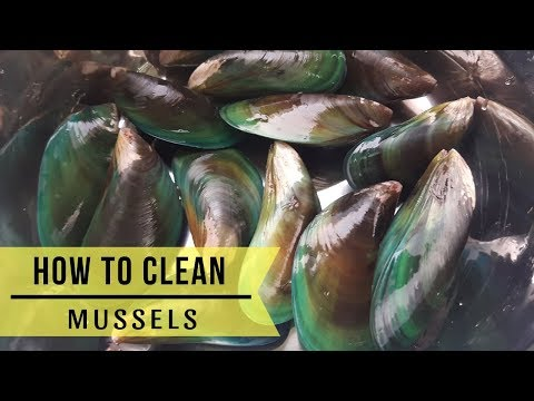 Paano Linisin ang Tahong (How to Clean Mussels)