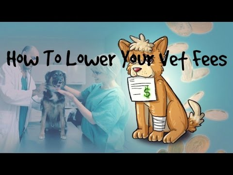 5 Tips To Avoid Getting Overcharged At The Vet