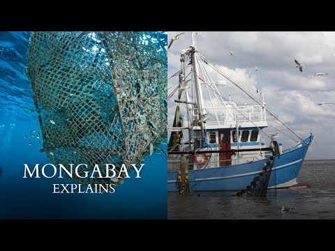 Mongabay Explains: What Is Bycatch?