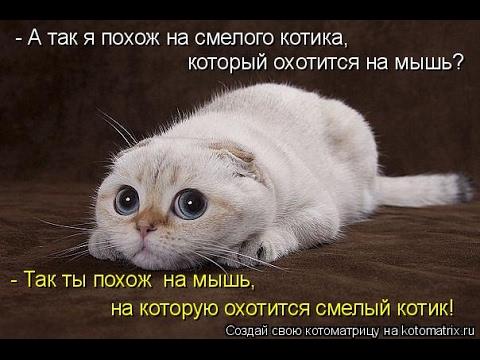 Смешные картинки про кошек и котят Выпуск №81  FUNNY CATS СМЕШНЫЕ КОШКИ